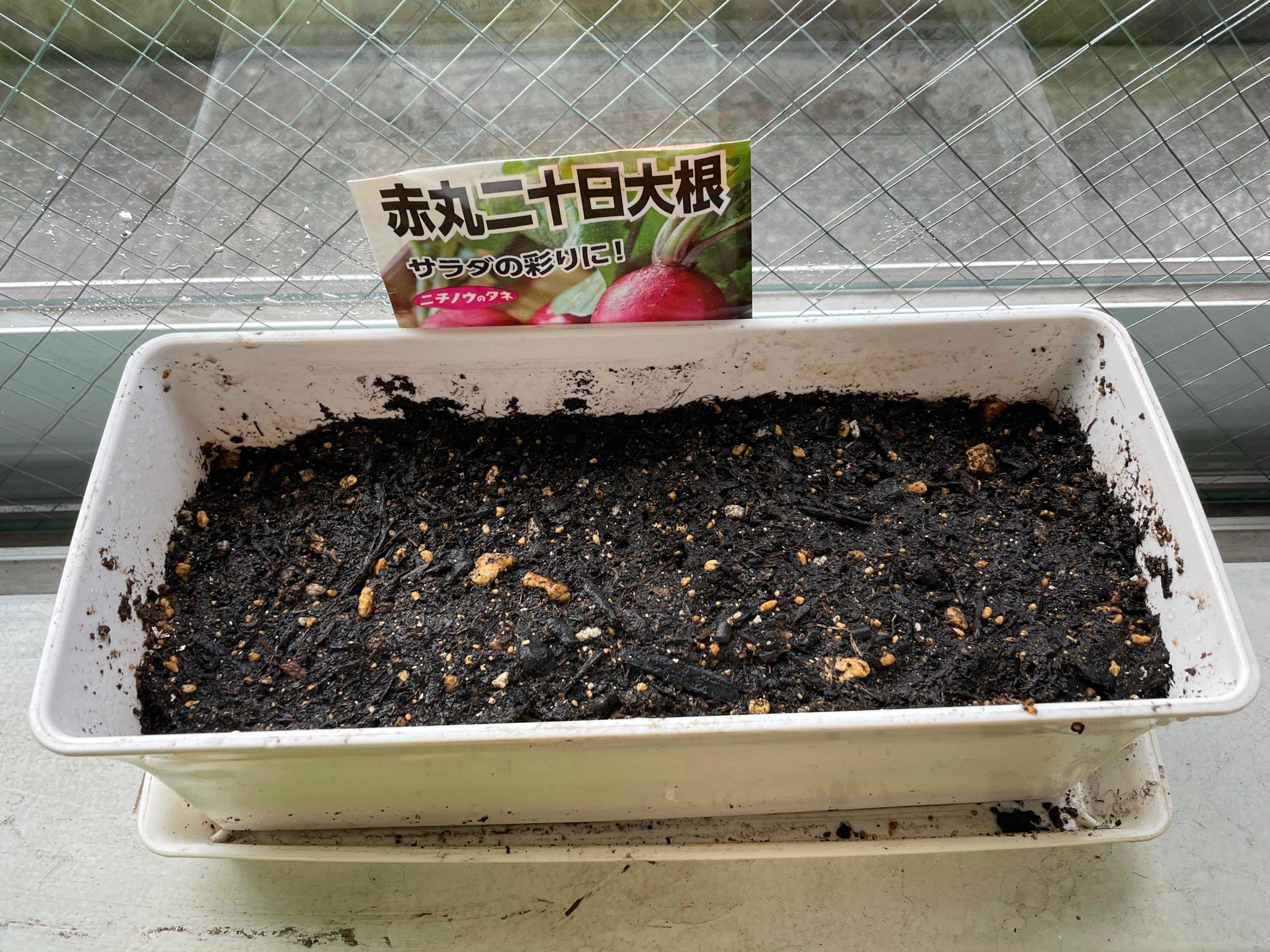 赤丸二十日大根.jpg